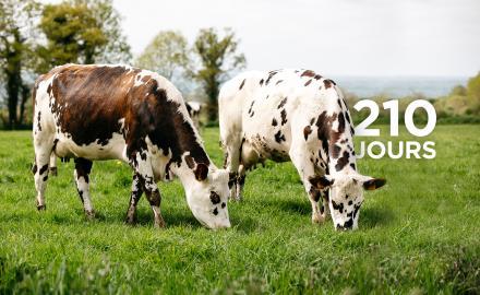 Il est l'heure pour les vaches laitières de retrouver le chemin des prés